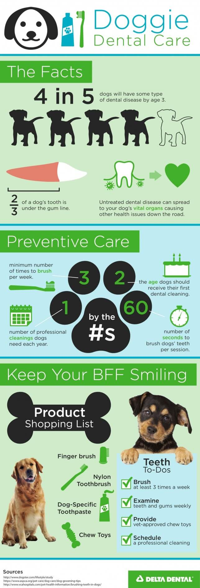 5627 Dog Teeth Infographic_F